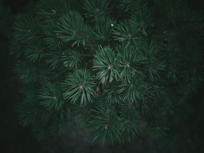 jungle_0036